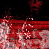 Witchfield