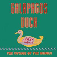 Galapagos Duck